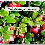 Лечебные растения купить в сочи