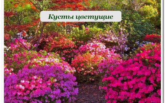 кусты цветущие
